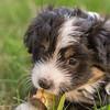 Squrril X Rouger 2021 puppies-814
