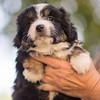 Squrril X Rouger 2021 puppies-820