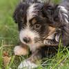 Squrril X Rouger 2021 puppies-813
