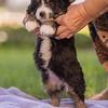 Squrril X Rouger 2021 puppies-821