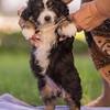 Squrril X Rouger 2021 puppies-822