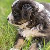 Squrril X Rouger 2021 puppies-812