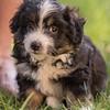 Squrril X Rouger 2021 puppies-825