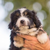 Squrril X Rouger 2021 puppies-819