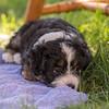 Squrril X Rouger 2021 puppies-827