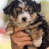 Squrril X Rouger 2021 puppies-806