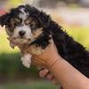 Squrril X Rouger 2021 puppies-808
