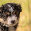 Squrril X Rouger 2021 puppies-801