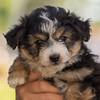 Squrril X Rouger 2021 puppies-807