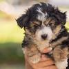 Squrril X Rouger 2021 puppies-805