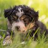 Squrril X Rouger 2021 puppies-816