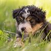 Squrril X Rouger 2021 puppies-817