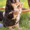 Squrril X Rouger 2021 puppies-826