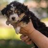Squrril X Rouger 2021 puppies-809