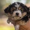 Squrril X Rouger 2021 puppies-810