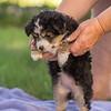 Squrril X Rouger 2021 puppies-811