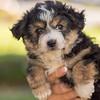 Squrril X Rouger 2021 puppies-804