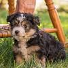 Squrril X Rouger 2021 puppies-824