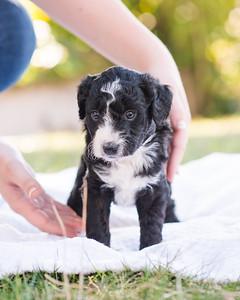 S & R puppy 5-506