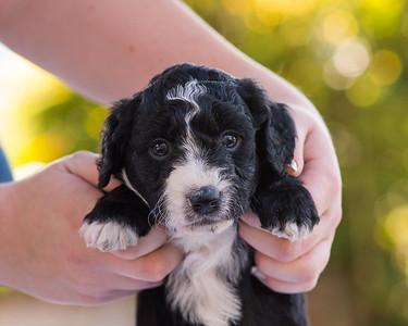 S & R puppy 5-503