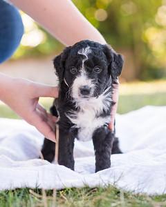 S & R puppy 5-505