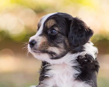 S & R puppy 6-606