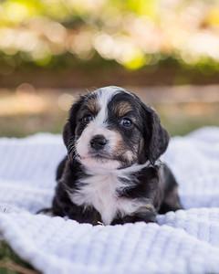 S & R puppy 6-601