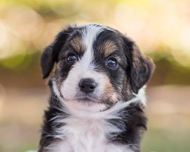 S & R puppy 6-607