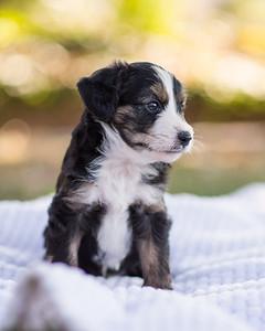 S & R puppy 6-609