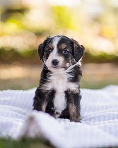 S & R puppy 6-604