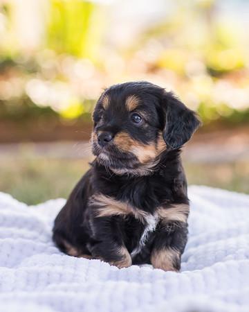 S & R puppy 7-700