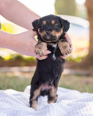 S & R puppy 7-704