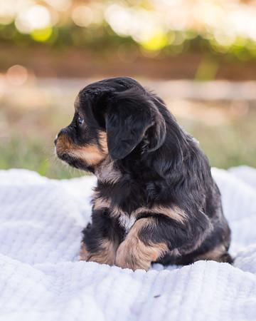S & R puppy 7-708