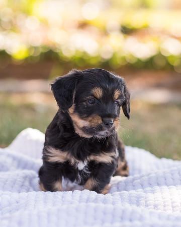 S & R puppy 7-702