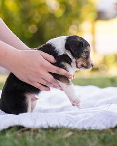 S & R puppy 3-104
