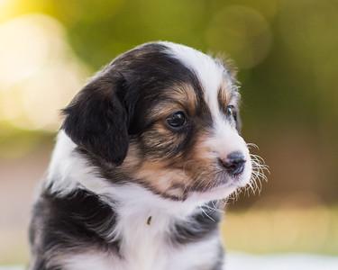 S & R puppy 3-109