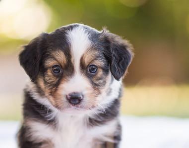 S & R puppy 3-105