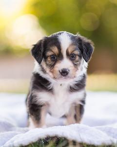 S & R puppy 3-106