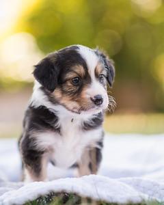S & R puppy 3-107