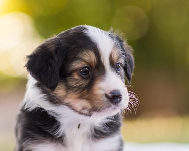 S & R puppy 3-108