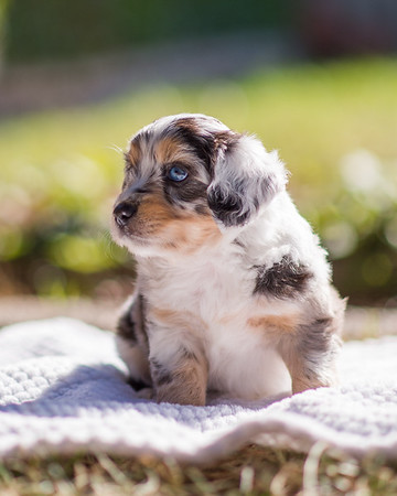 S & R Puppy Blue Girl -101