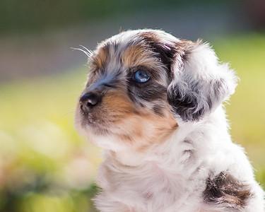 S & R Puppy Blue Girl -105