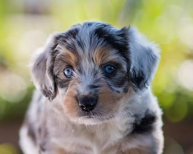 S & R Puppy Blue Girl -115
