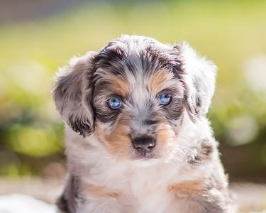 S & R Puppy Blue Girl -108