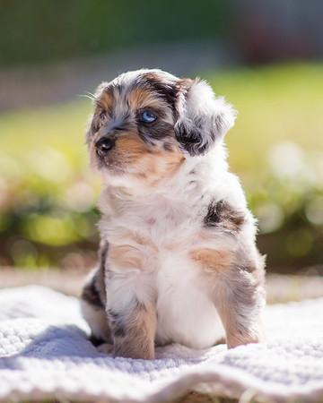 S & R Puppy Blue Girl -107