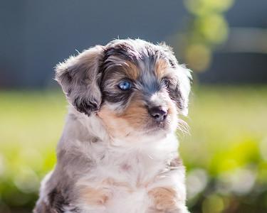 S & R Puppy Blue Girl -114