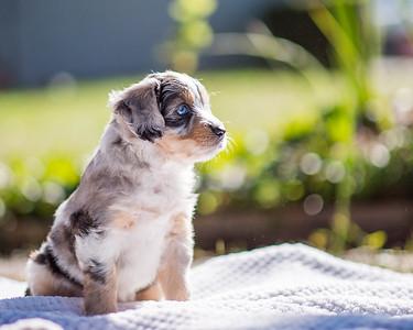 S & R Puppy Blue Girl -113