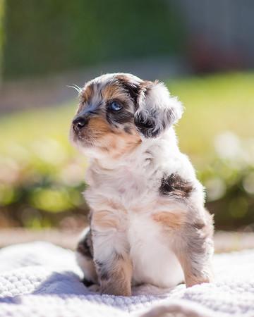 S & R Puppy Blue Girl -104