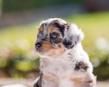 S & R Puppy Blue Girl -103