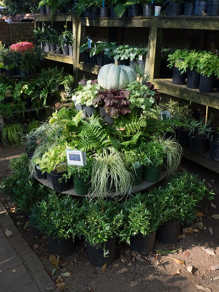 Wing Haven Plant Sale